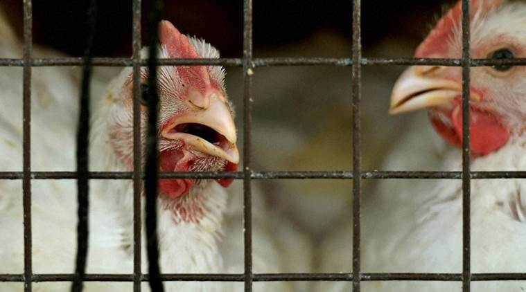 В Россию временно запретили ввозить мясо птицы и яйца из еще двух районов Германии