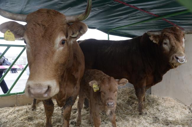 В Кабардино-Балкарской Республике развивается животноводство