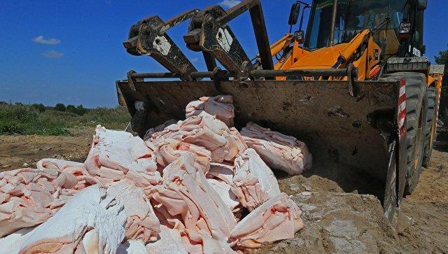 Россельхознадзор за время действия эмбарго уничтожил свыше 25 тыс. тонн продуктов
