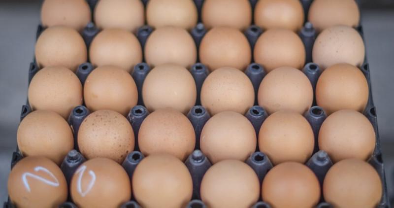 Из-за птичьего гриппа воронежская птицефабрика терпит убытки в 1 млрд рублей