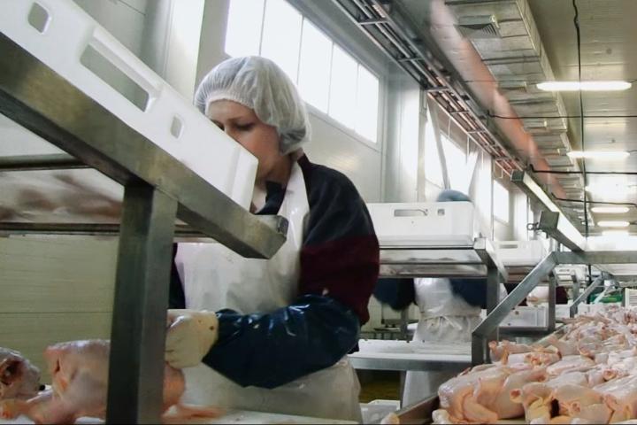 Объёмы производства свинины и мяса птицы выросли на Ставрополье