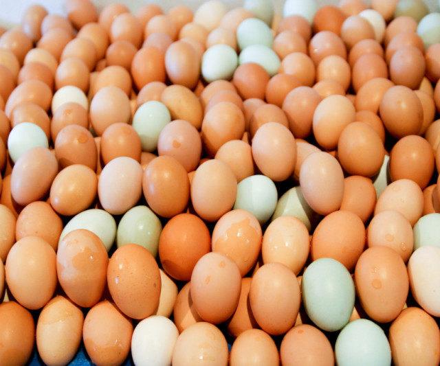 Российские куры стали нести больше яиц