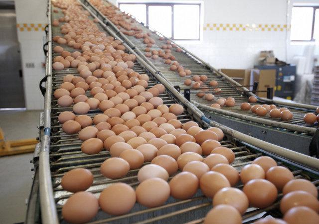 На птицефабриках в Дагестане увеличится производство яиц