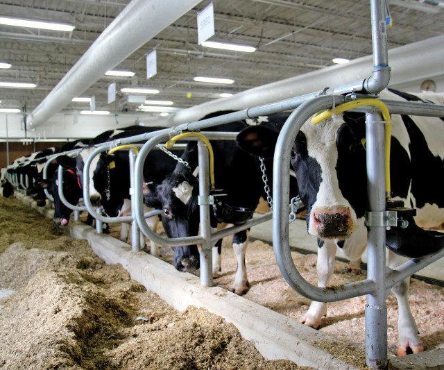 «Агрокомплекс» имени Н. Ткачева опроверг проблемы с финансированием ростовского молочного комплекса