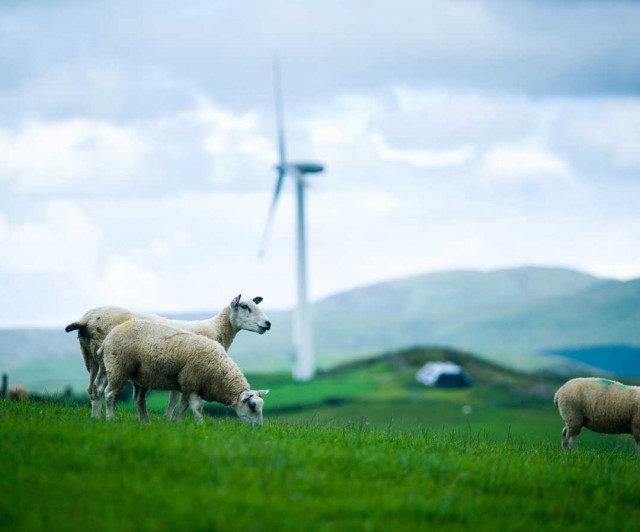 Абдулмуслим Абдулмуслимов рассказал о проводимой селекционно-племенной работе по улучшению Дагестанской горной породы овец