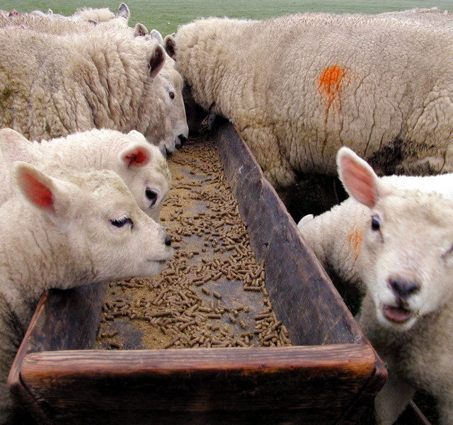Дагестан республика: В Левашинском районе построят площадки для откорма овец